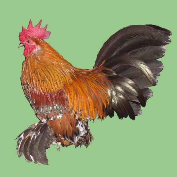 o trouver des animaux de la ferme salon de provence poules sabelpoot village des automates
